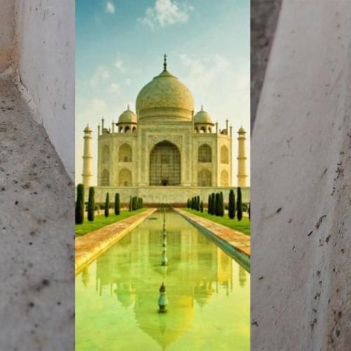 Indie - Podobne do komarów owady pokrywają marmury Tadż Mahal zielono-czarną wydzieliną