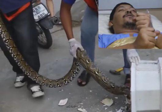 Tajlandia - Ogromny pyton zaatakował w toalecie, mężczyzna walczył pół godziny z przyssanym do penisa pytonem -5