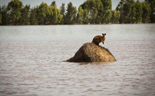 Australia - Duże straty po powodzi -1