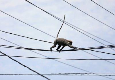 Gitaru Dam, Kenia - Mała małpka zrobiła zwarcie w elektrowni wodnej na 180 MW mocy -2