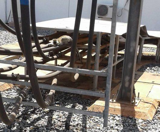 Gitaru Dam, Kenia - Mała małpka zrobiła zwarcie w elektrowni wodnej na 180 MW mocy -3