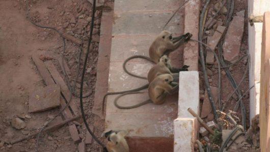 Gitaru Dam, Kenia - Mała małpka zrobiła zwarcie w elektrowni wodnej na 180 MW mocy -4