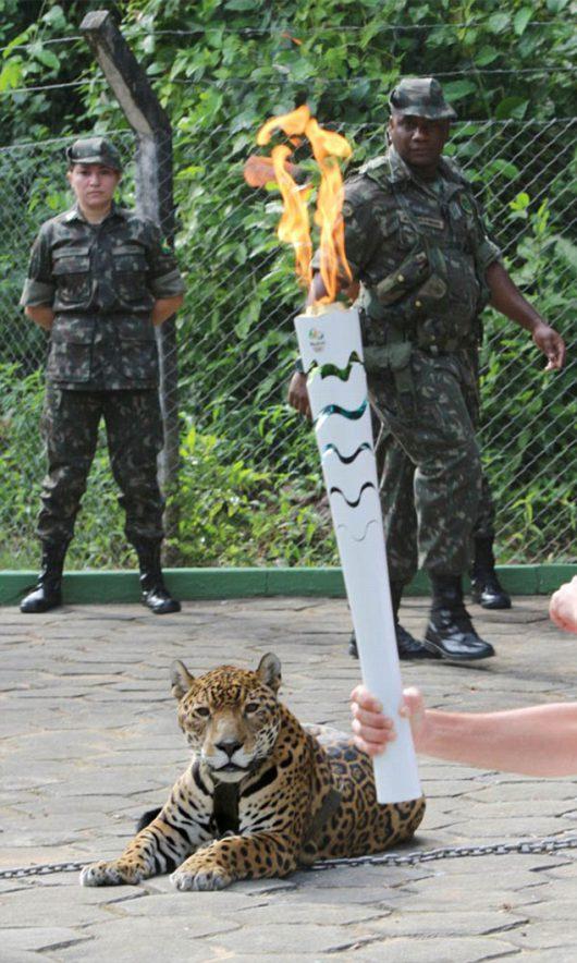 Manaus, Brazylia - Jaguar Juma brał udział w ceremonii zapalenia znicza olimpijskiego -7