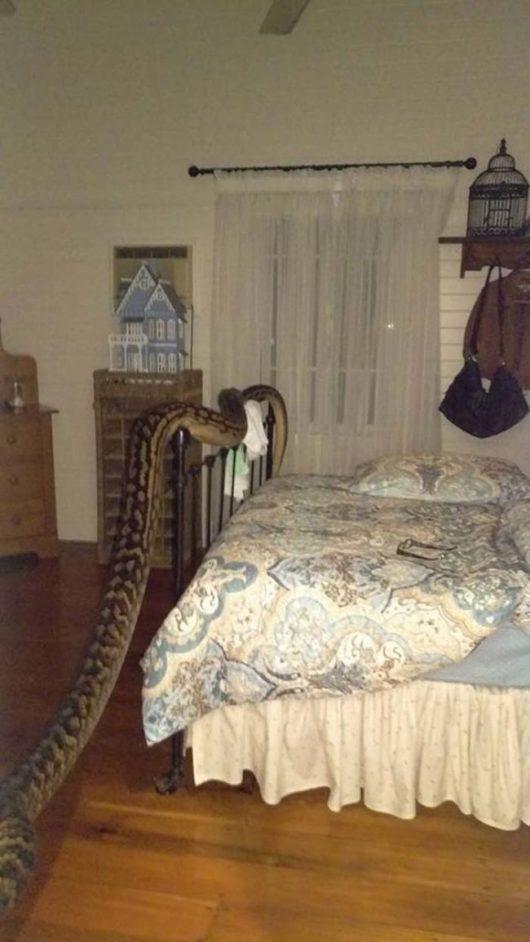 Mission Beach, Australia - Kobieta obudziła się w sypialni z pięciometrowym pytonem