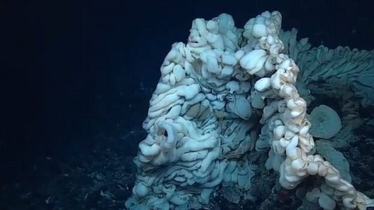 Odkryto nieznane stworzenie, to największa gąbka na świecie -1
