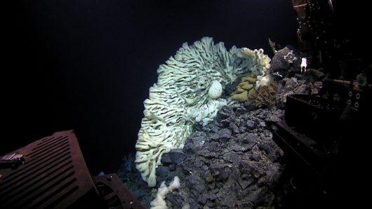 Odkryto nieznane stworzenie, to największa gąbka na świecie