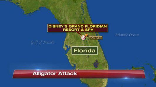 Orlando, USA - Obok Disneylandu aligator wciągnął do wody dwuletnie dziecko -1