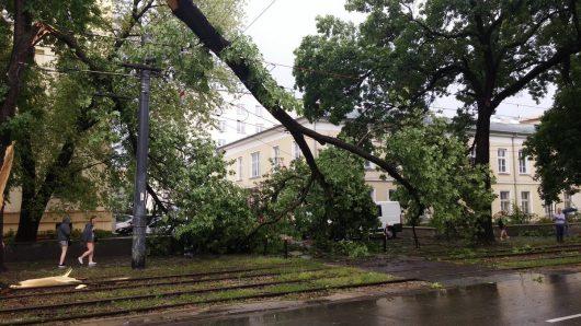 Wichura w Polsce 2016.06.17 -3