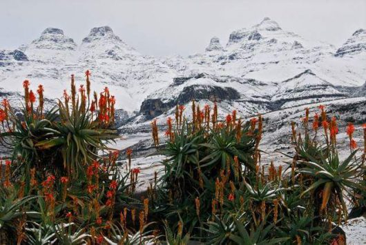 Śnieg i ogromne ulewy w Afryce Południowej -2