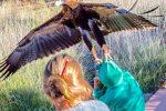 Alice Springs, Australia - Na pokazie dzikich ptaków orzeł chciał porwać 7-latka -2