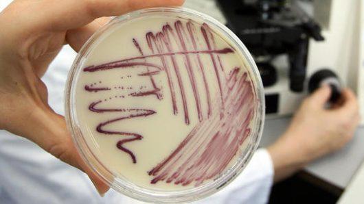 Bakteria znajdująca się w ludzkim nosie wytwarza nieznany dotąd wyjątkowy antybiotyk, który może zwalczać lekooporne patogeny