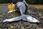 Chile - Około 70 martwych wielorybów odkryto na bezludnej wyspie -1