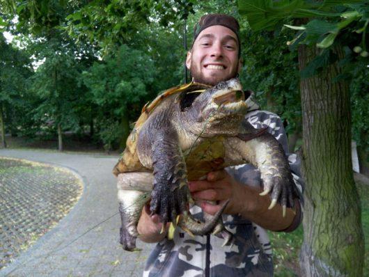 Kutno, Polska - Pierwszy raz złapano groźnego dla ludzi żółwia jaszczurowatego -1