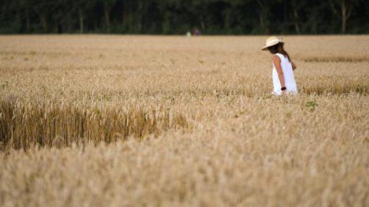 Mammendorf, Niemcy - Kręgi na polu kukurydzy w Bawarii -4