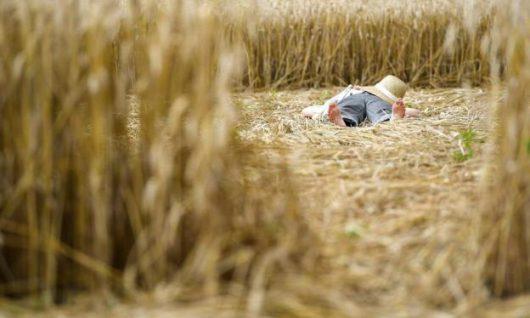 Mammendorf, Niemcy - Kręgi na polu kukurydzy w Bawarii -6