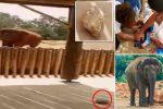 Maroko - Słoń w zoo rzucił kamieniem w ludzi