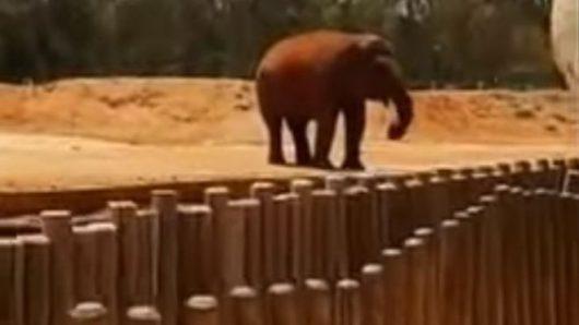 Maroko - Słoń w zoo rzucił kamieniem w ludzi -2