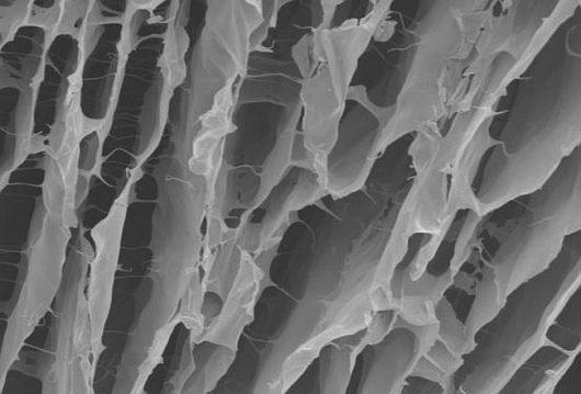 Rusztowanie z hydrożelu pod mikroskopem