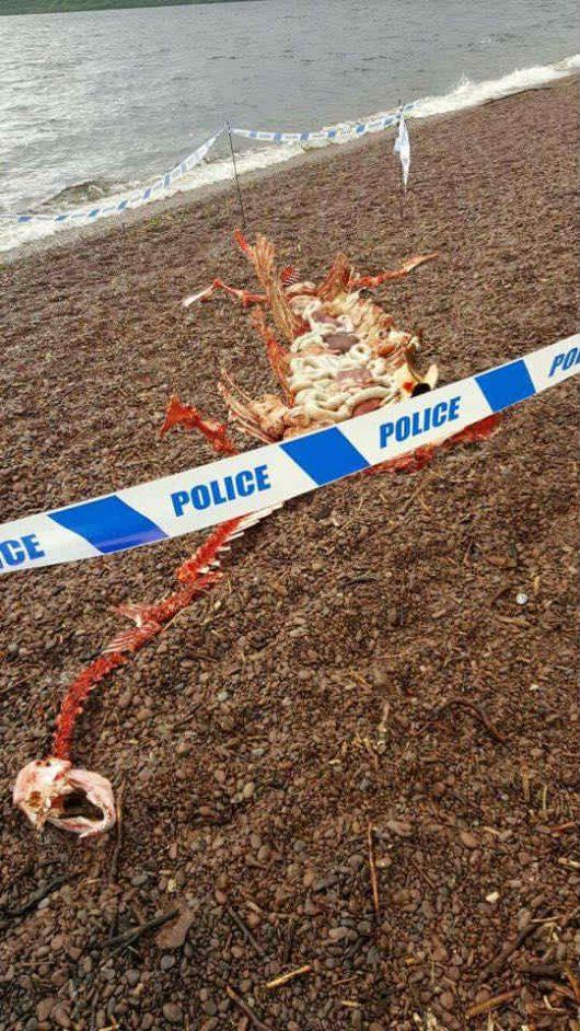 Szkocja - Na brzegu jeziora Loch Ness znaleziono szczątki olbrzymiego gada -1