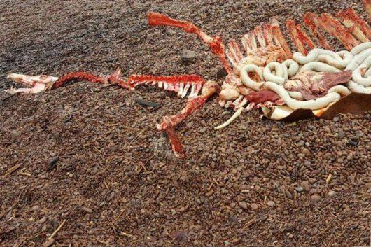 Szkocja - Na brzegu jeziora Loch Ness znaleziono szczątki olbrzymiego gada -2