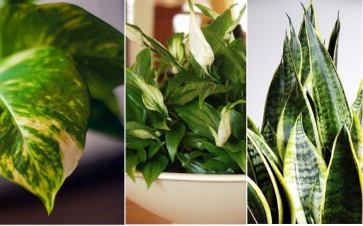 10 roślin najlepiej oczyszczających powietrze w twoim domu