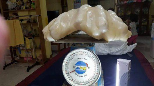 Filipiny - Rybak wyłowił największą perłę na świecie, waży 34 kg -1