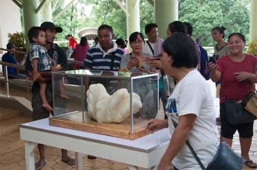 Filipiny - Rybak wyłowił największą perłę na świecie, waży 34 kg -2