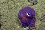 Nautilus natknął się na niezwykłe stworzenie