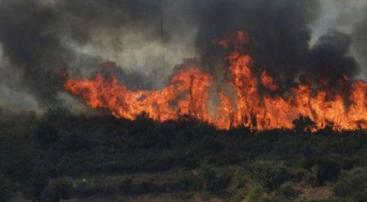 Portugalia - Ponad cztery tysiące strażaków walczy z 702 pożarami lasów -1