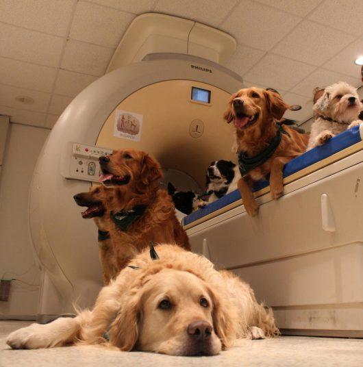 Psy, które uczestniczyły w eksperymencie /Eniko Kubinyi /materiały prasowe