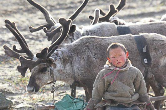 Syberia, Rosja - U 20 osób z rodzin hodowców reniferów wykryto wąglika