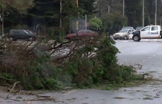 argentyna-potezna-wichura-wyrywala-drzewa-i-niszczyla-domy-w-buenos-aires-3