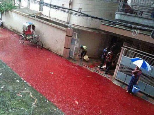 dhaka-bangladesz-krew-zabijanych-zwierzat-zabarwila-potoki-powodziowe-1