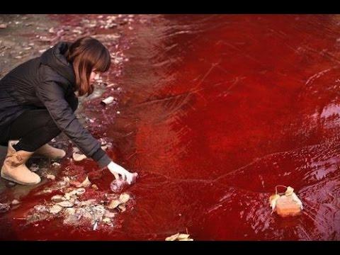 dhaka-bangladesz-krew-zabijanych-zwierzat-zabarwila-potoki-powodziowe-8