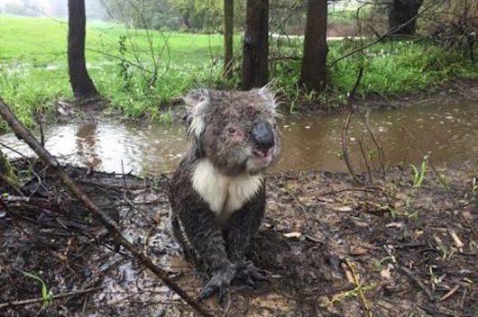 powodz-w-australii-1