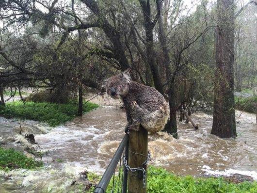 powodz-w-australii-2