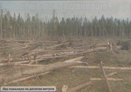 rosja-powstal-krater-a-drzewa-w-promieniu-kilkuset-metrow-zostaly-powalone-2