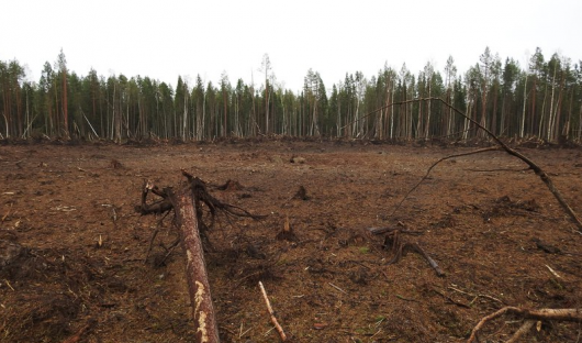 rosja-powstal-krater-a-drzewa-w-promieniu-kilkuset-metrow-zostaly-powalone-3