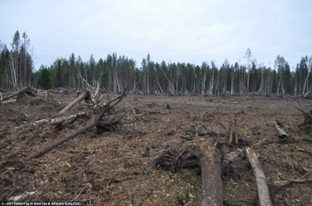 rosja-powstal-krater-a-drzewa-w-promieniu-kilkuset-metrow-zostaly-powalone-4