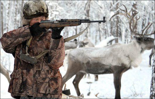 syberia-rosja-szykuje-sie-ogromna-masakra-wladze-chca-wybic-250-z-700-tysiecy-reniferow-z-najwiekszego-na-swiecie-stada-2