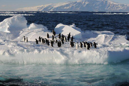 antarktyda-na-morzu-rossa-powstanie-najwiekszy-na-swiecie-rezerwat-morski