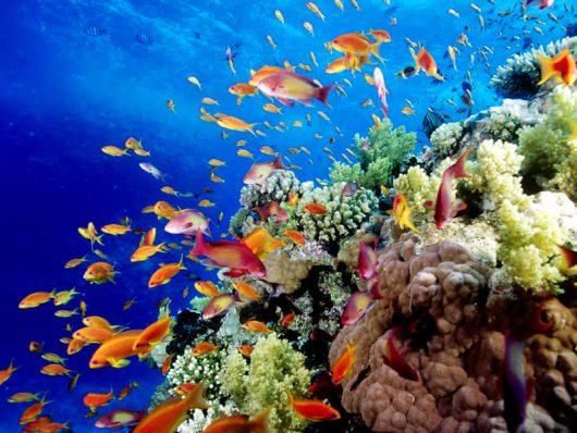 wielka-rafa-koralowa-2