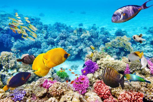 wielka-rafa-koralowa-3