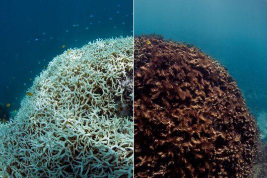 wielka-rafa-koralowa-umiera-3