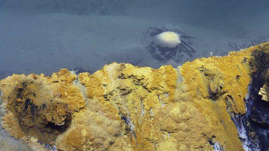 kilometr-pod-woda-na-dnie-zatoki-meksykanskiej-odkryto-toksyczne-solankowe-jezioro-jacuzzi-rozpaczy-1