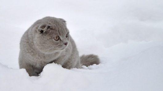 kot-i-snieg