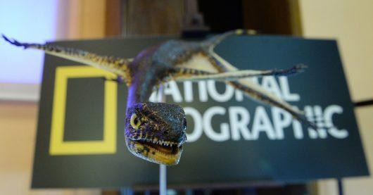 Model Ozimka Volans, który żył 230 mln lat temu /Jacek Turczyk /PAP