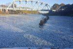 nowy-jork-usa-na-powierzchnie-wody-w-kanale-wyplynely-dziesiatki-tysiecy-ryb-2