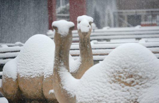 ogromna-anomalia-w-arabii-saudyjskiej-pustynia-zasypana-sniegiem-i-temperatury-ujemne-14