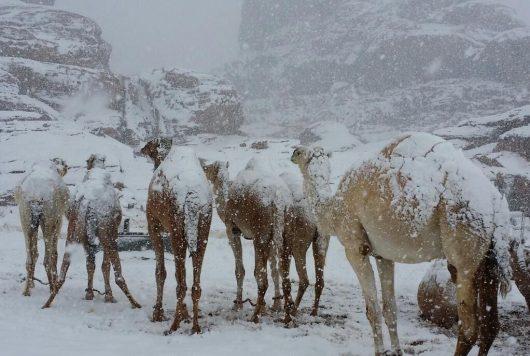 ogromna-anomalia-w-arabii-saudyjskiej-pustynia-zasypana-sniegiem-i-temperatury-ujemne-8